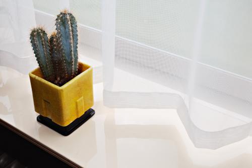 A.D. Copier. Vierkante cactuspot. Foto: Johannes Schwartz
