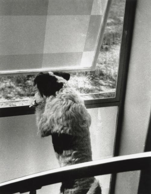 Het matglazen raam in het trappenhuis. Collectie Het Nieuwe Instituut. Bruikleen BIHS